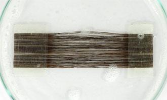 毛髪サンプル(浸漬中)